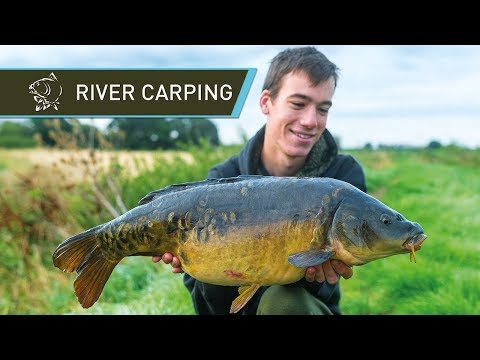River Carp Fishing for BEAUTIFUL Carp