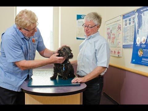 Centennial Animal Hospital on Pembina  Interview with Winnipeg Veterinarian Dr Gord Goodridge DVM