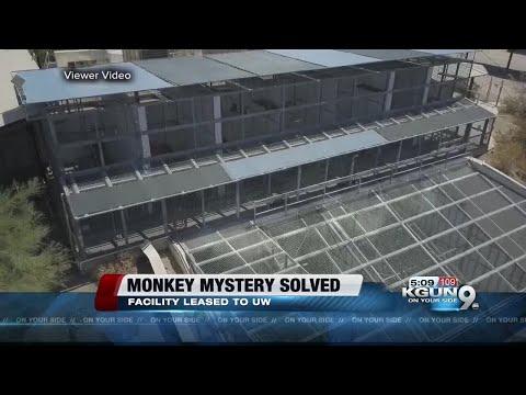 Mesa monkey facility mystery solved