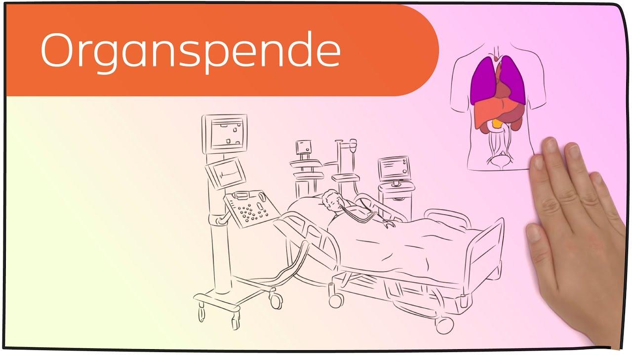Organspende in 3 Minuten erklärt