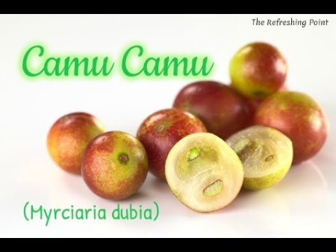 Camu Camu: Most Potent Food Source of Vitamin C - Amazonian Superfood  - Rich in Antioxidants