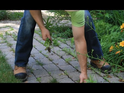 How to remove weeds from paving stone joints