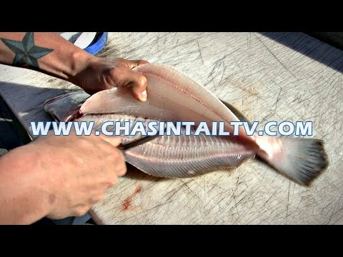 Fillet a Flounder in Under 15 seconds!!   Chasin' Tail TV