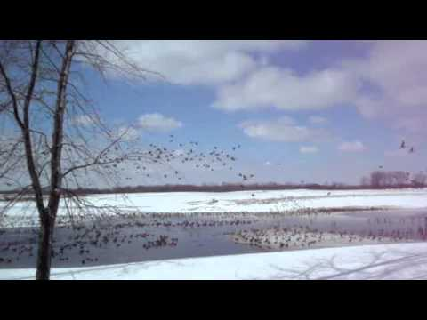 The Waterfowl of Otter Creek - 682 Acres for Sale in Fulton County Illinois