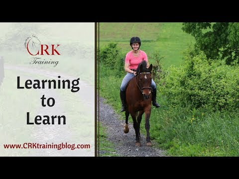 Learning to Learn - How it makes your horse smarter and more trainable