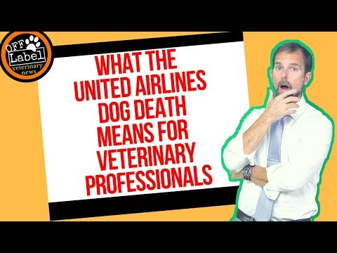 What the United Airlines Dog Death Means for Veterinary Professionals