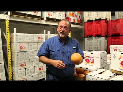 How to pick a grapefruit