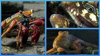 Crab vs Eel vs Octopus | Blue Planet II
