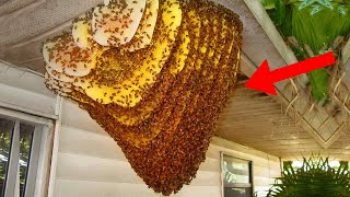 10 Worst Bug Infested Houses Of All Time