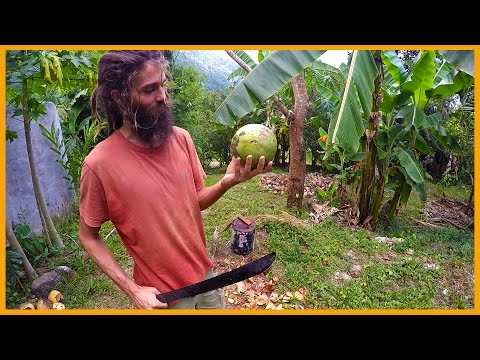 HOW TO OPEN A FRESH YOUNG COCONUT: MACHETE STYLE