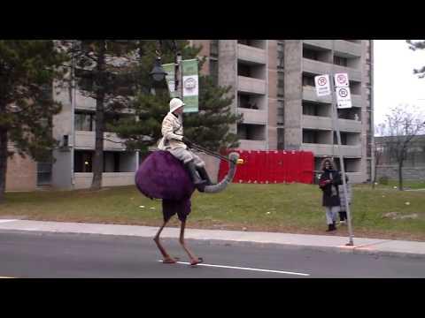 Ostrich in Weston Santa Claus Parade