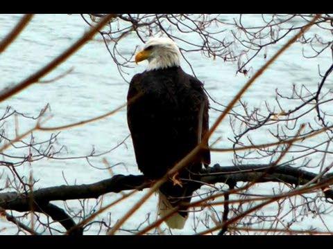Eagles In Ohio?