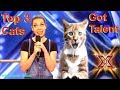 Download  Savitsky Cats Got Talent Auditions! Amazing Cat Talent! Best Top 3 Funny Cute Animals! AGT 2018 MP3,3GP,MP4
