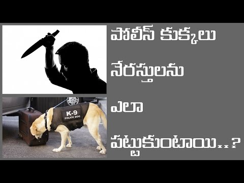 Do You Know How DOGS Hold The Criminals..? || పోలీస్ కుక్కలు నేరస్తులను ఎలా పట్టుకుంటాయి..?