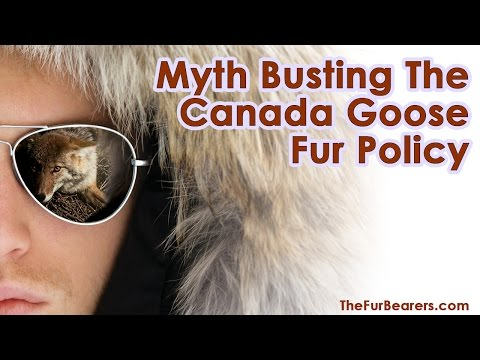 Busting the Canada Goose Fur Policy