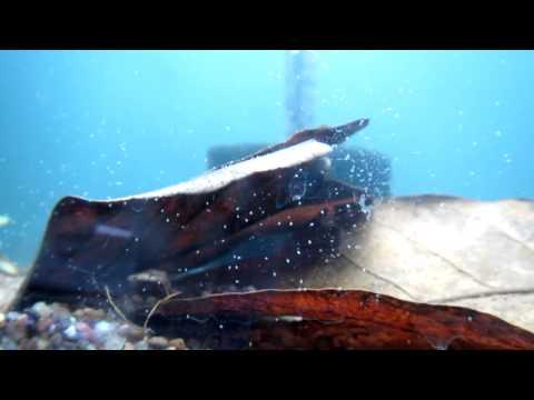 Unidentified little white creatures in aquarium