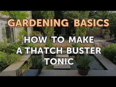 How to Make a Thatch Buster Tonic