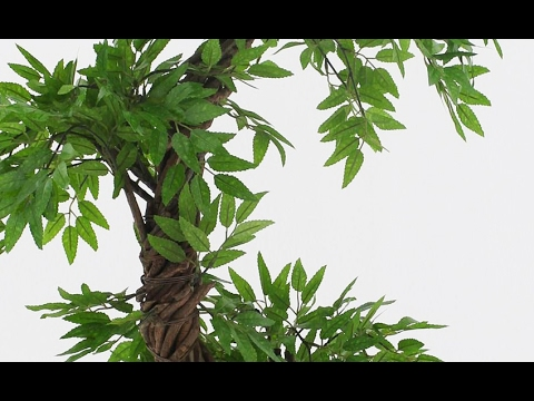 Quality Artificial Japanese Fruticosa Tree by Vert Lifestyle Vogue Plants