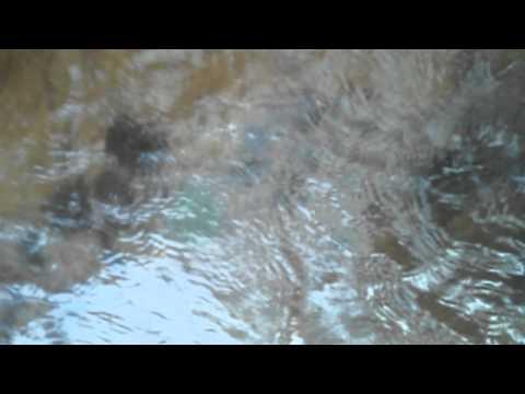 Arrowhead hunting Illinois creeks