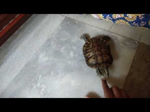 Tortoise playing with Finger