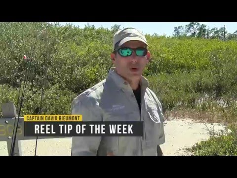 Catching Fiddler Crabs The Easy Way