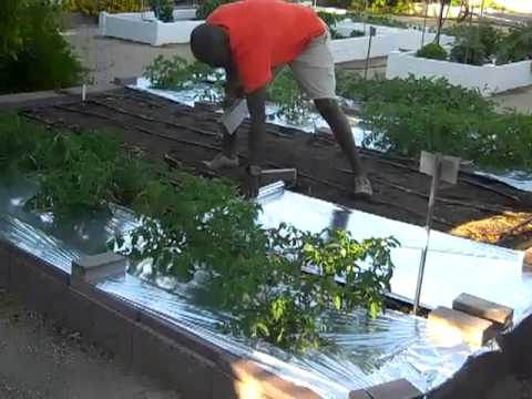 How I Use Silver Reflective Mulch