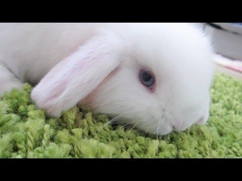 Bunny Destroys Carpet!