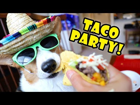 CORGI'S TACO Eating Party (Dog Friendly) || Life After College: Ep. 598