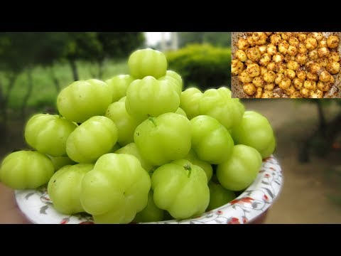 Fresh Star Gooseberry Recipe | Simple and Easy Recipe | VILLAGE FOOD