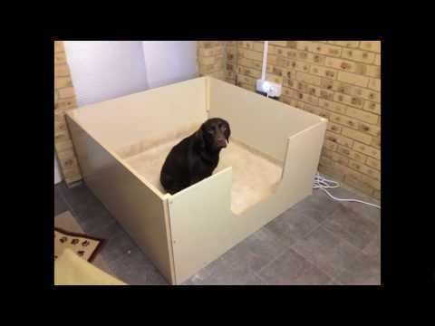 Ruby the Chocolate Labrador - whelping box 'The Big Build' time lapse
