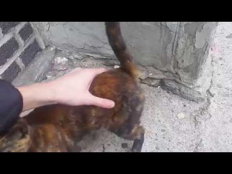 Stray ABANDONED NYC kitten NEEDS HOME - NO survival skills sits in POURING RAIN in NY - Pt. 2
