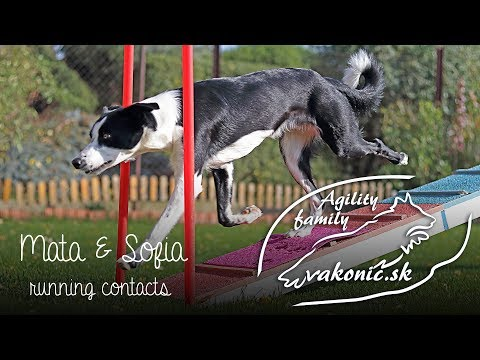 Martina & Sofia: Agility Training: Running Contacts