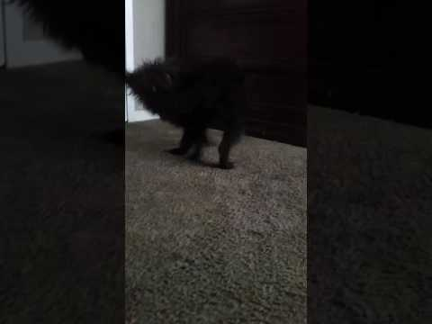 She likes to chase her tail