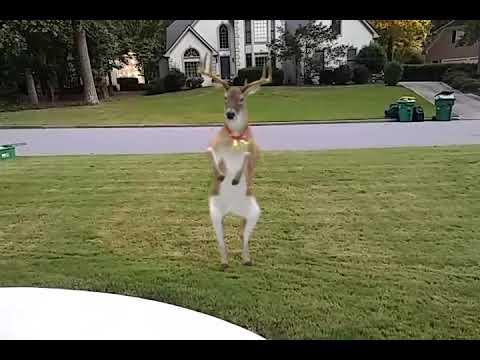 Bad deer