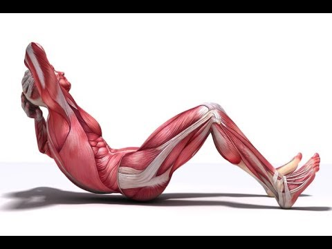 5 Home Exercises to Lose Belly Fat Fast   Simple Exercises for Beginners at Home