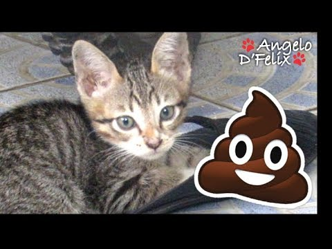 Signs of a Sick Kitten - And What to Do (Part 5): DIARRHEA