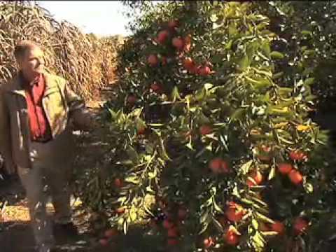 Georgia Grown Citrus  - Georgia Farm Monitor