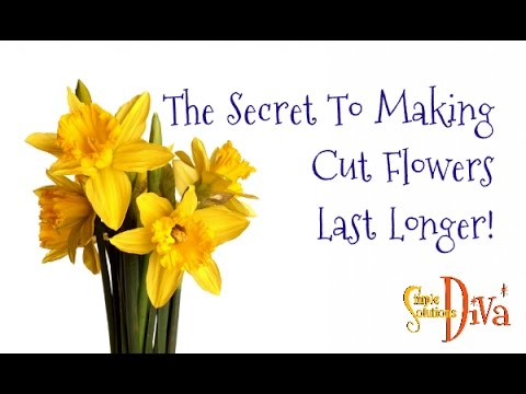 The Secret To Making Cut Flowers Last Longer!