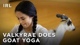 Valkyrae Does Goat Yoga, ft. Peeing Goats | IRL - HTC Esports