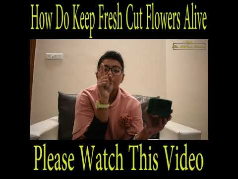 How Do Keep Fresh Cut Flowers Alive