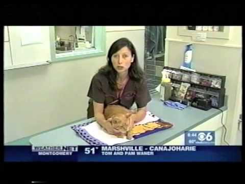 Ask the Vets: Cat Problems - Spraying the house (8/12/13)