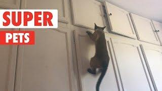 Super Pets | Funny Pet Video Compilation 2017