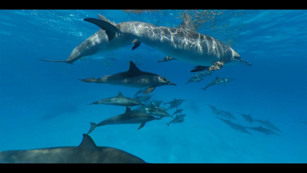 Voyage au milieu des dauphins