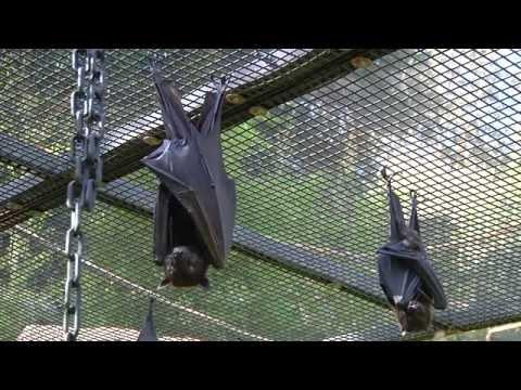 Bat Myths: Bats Actually Have Good Eyesight