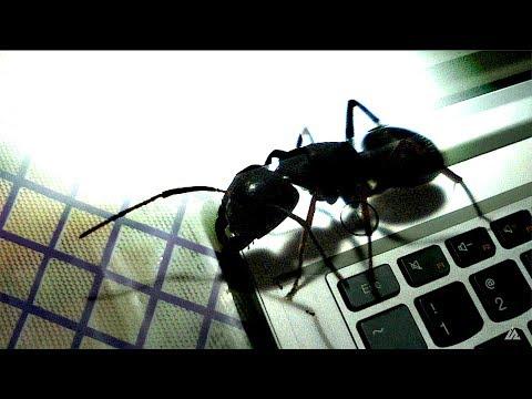 How to remove ants from your laptop | चींटी भगाएं लैपटॉप से