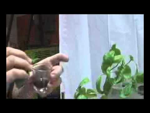 HydroWholesale™ Presents: Ch. 1 Cloning A Mother Plant & Seed Propagation Germination