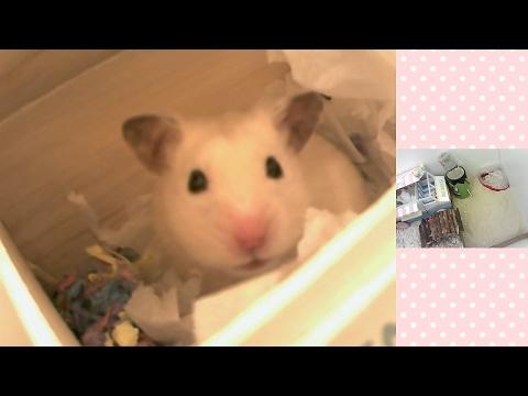 🐹 Ham Ham Night Cam 🌜 Stream Highlights