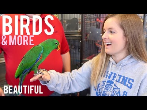 My Favorite Pet Store Tour & Holding Birds