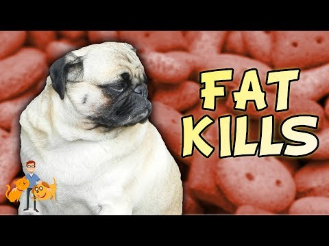 The Danger of Pet Obesity for Dogs and Cats: are fat pets unhealthy?