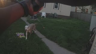 Body Camera Video In Minneapolis Dog Shooting Released